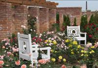 krzesła wśród róż
